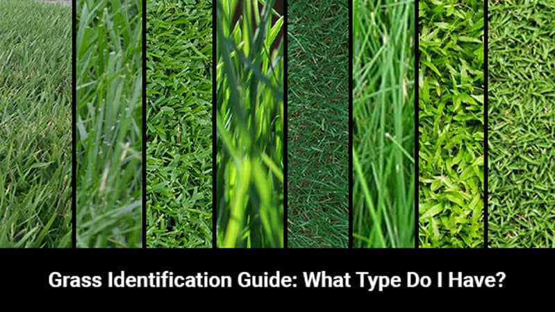 grass identification guide blog post featured image