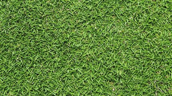 bermuda grass photo