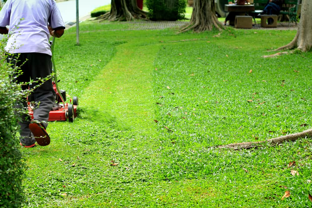 12 Ways to Conserve Water in Your Lawn 10