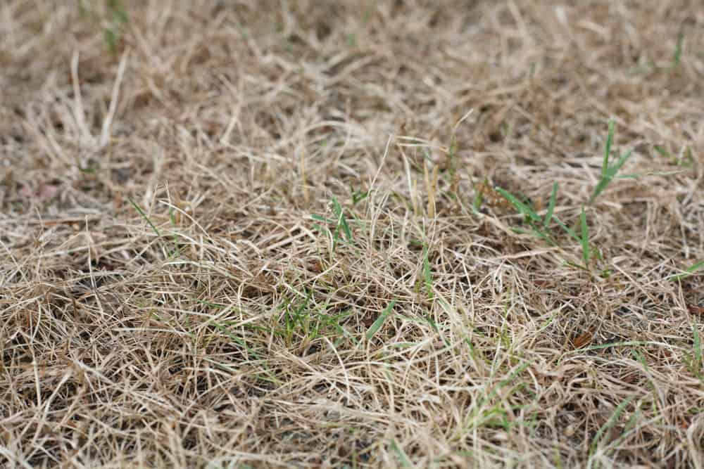 Why is My Lawn Dying? 8 Common Reasons for Brown Spots 6