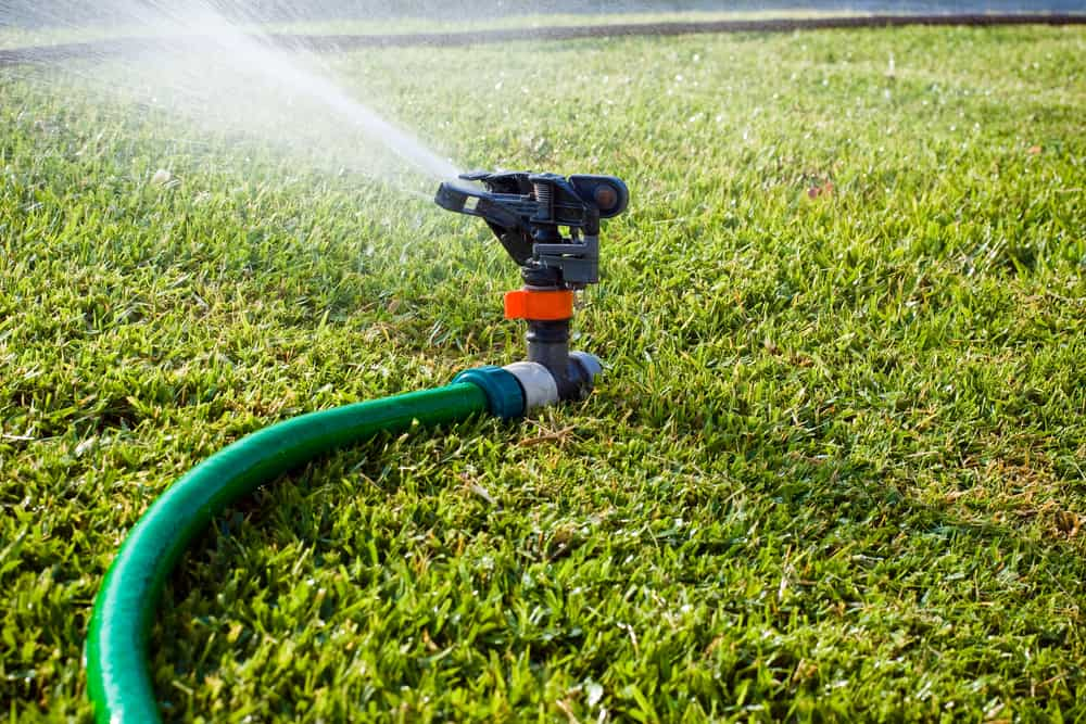 Why is My Lawn Dying? 8 Common Reasons for Brown Spots 7