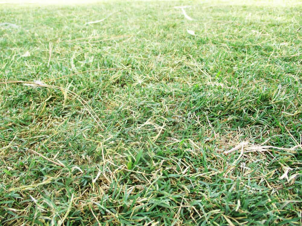 Why is My Lawn Dying? 8 Common Reasons for Brown Spots 3