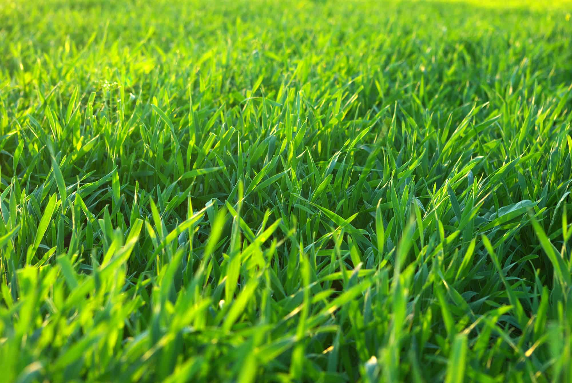 What Is Liquid Lawn Aeration? And Is It Effective? 1