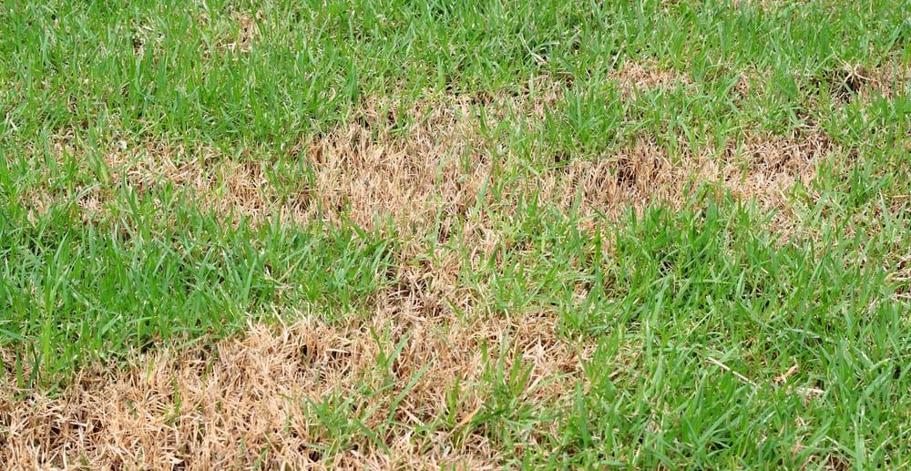 Why is My Lawn Dying? 8 Common Reasons for Brown Spots 8