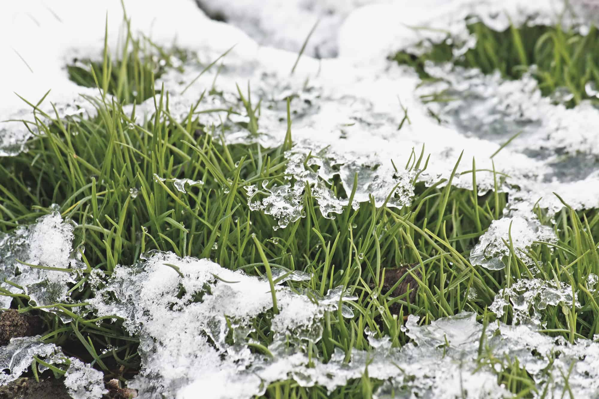 Winter Lawn Care Tips - Is There Anything You Can Do? 2