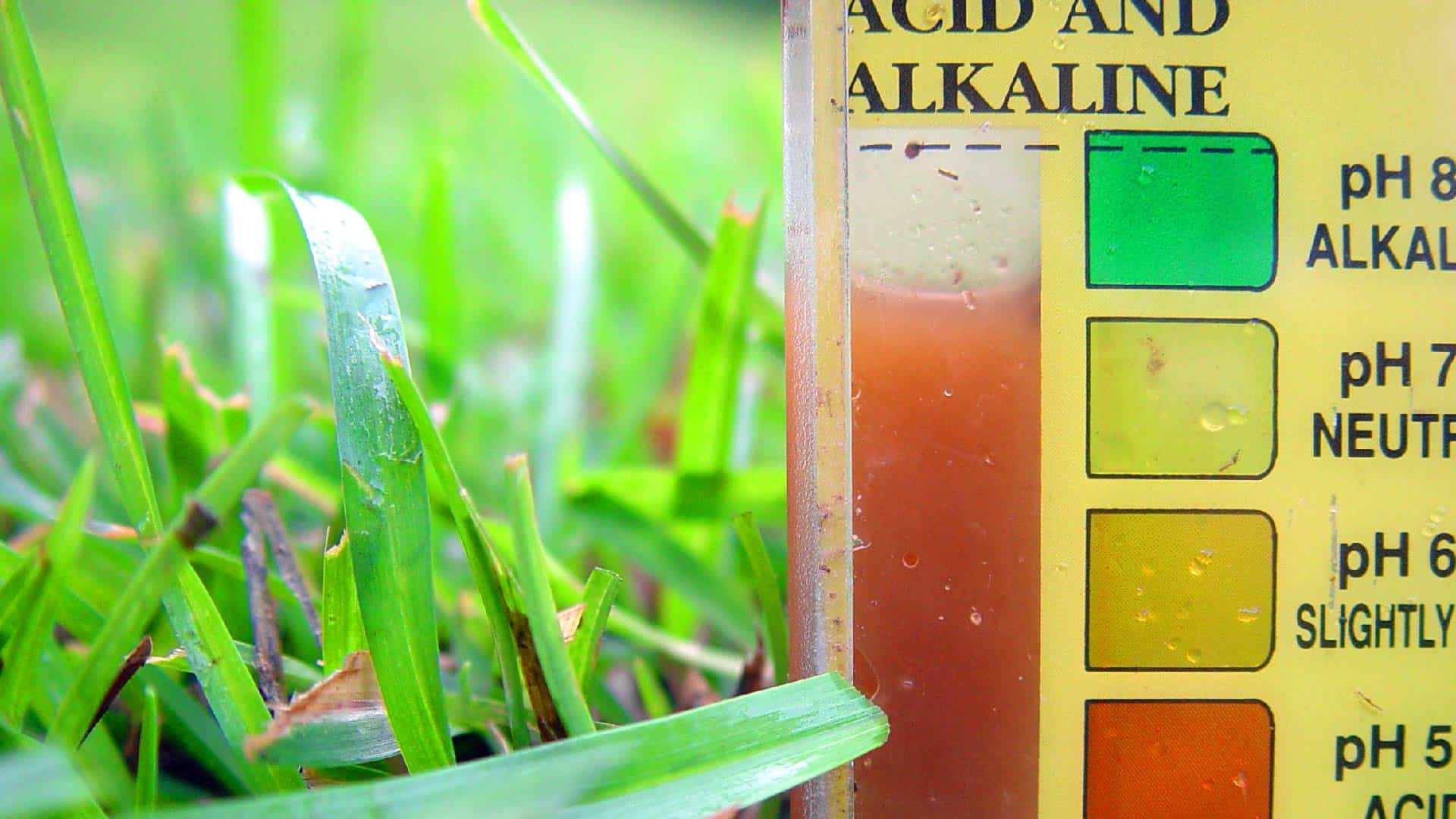 Your Soil pH Explained: How to Test, Read and Treat pH Imbalances 1