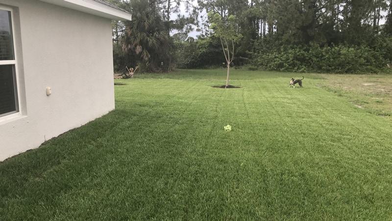 large bahiagrass lawn