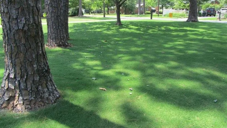 large bermudagrass lawn
