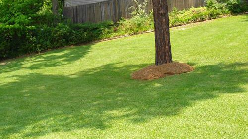 large centipedegrass lawn