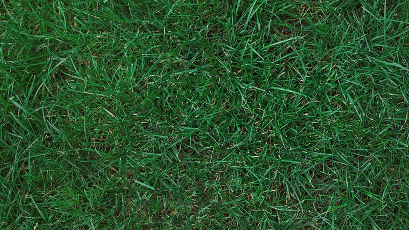 Best Types of Grass to Grow in the Shade 6