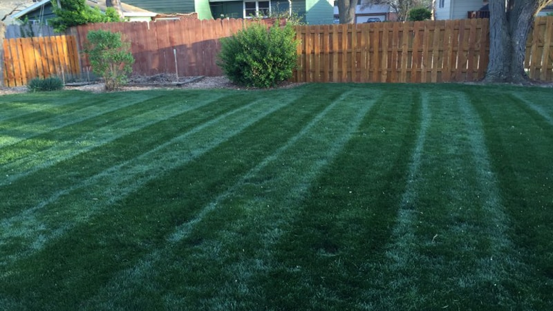 Summer Lawn Care Tips: How to Keep Your Lawn Healthy in the Heat 1