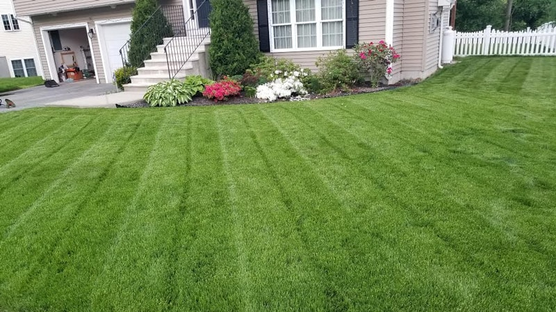 large perennial ryegrass lawn