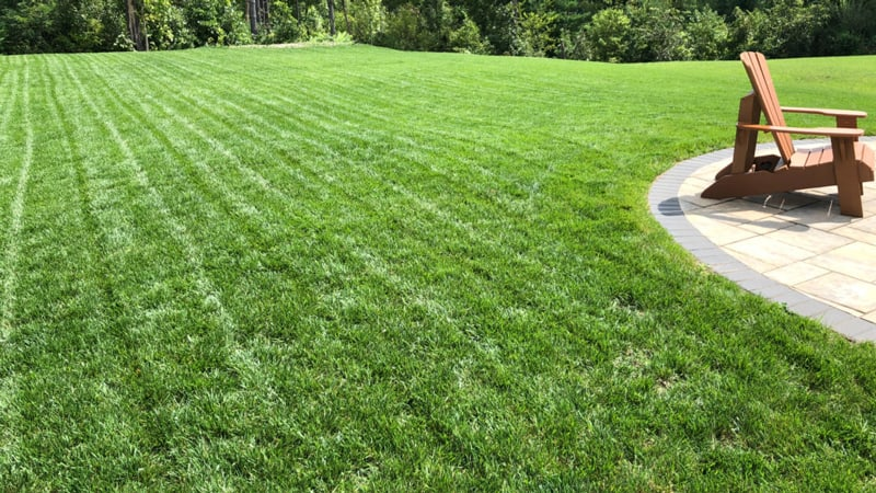 large tall fescue lawn