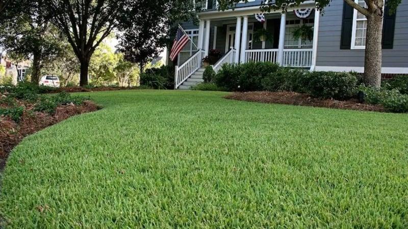 large zoysia lawn
