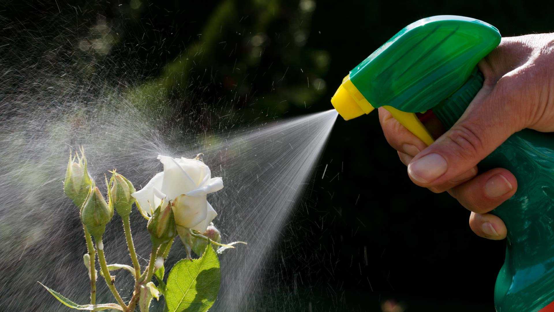 Lawn Safety | Beware of These Potentially Harmful Chemicals 2
