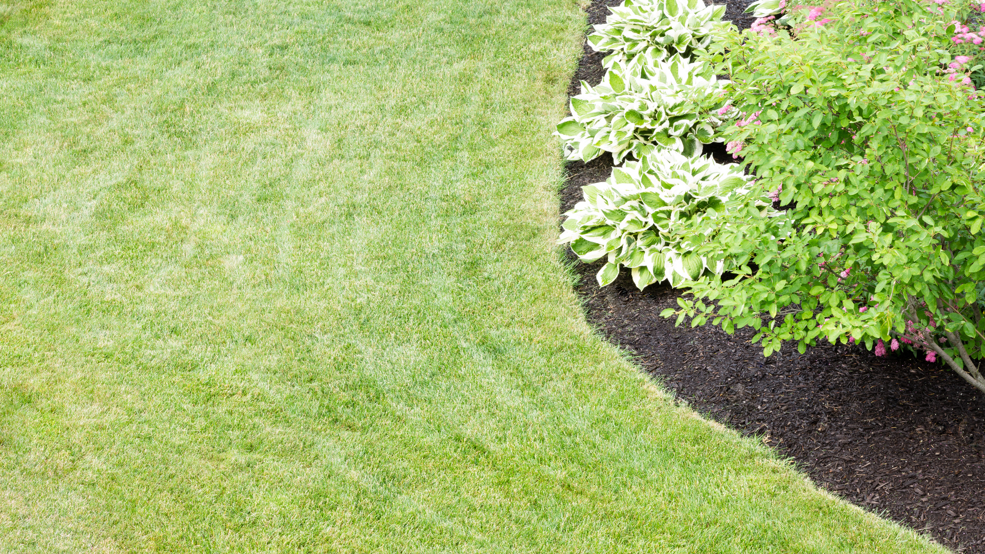 Mulched bed with plants in green grass lawn