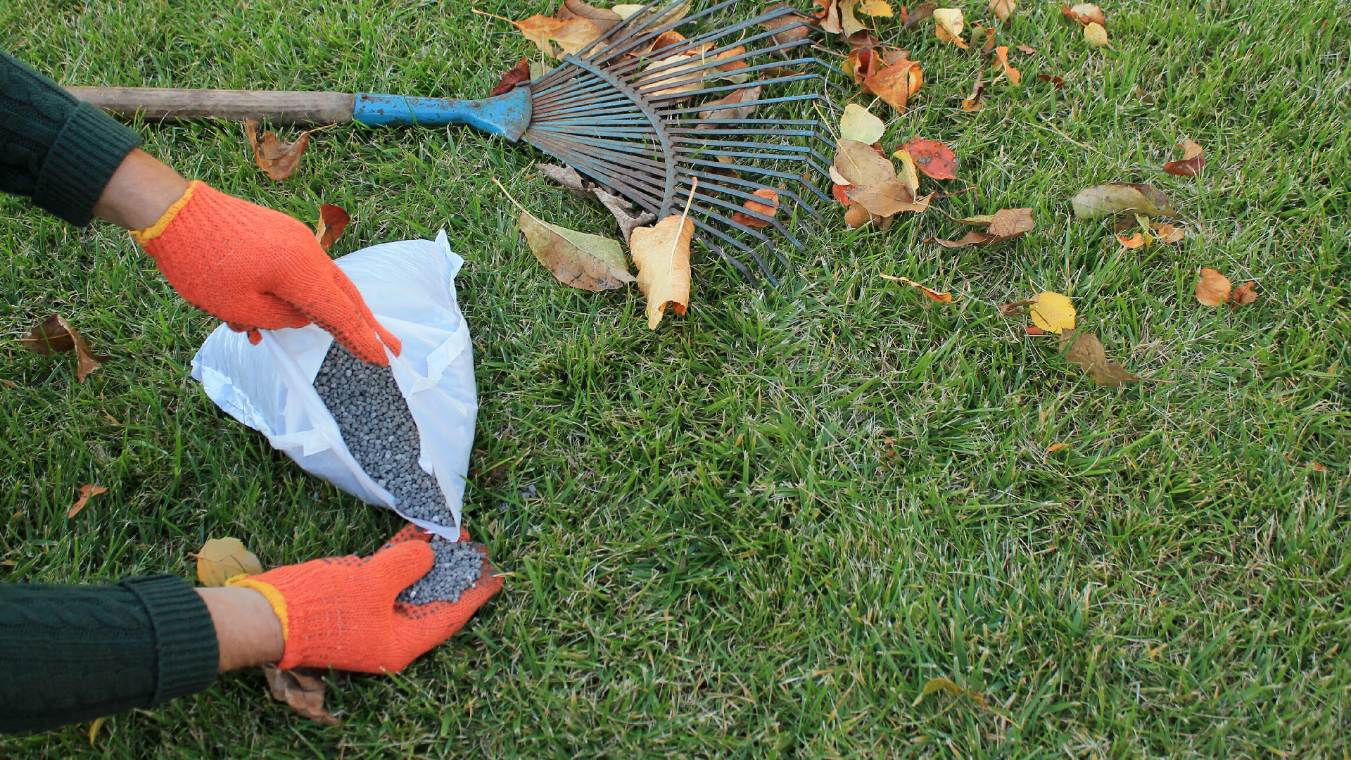 granular fertilizer on green grass beside rake and fall leaves