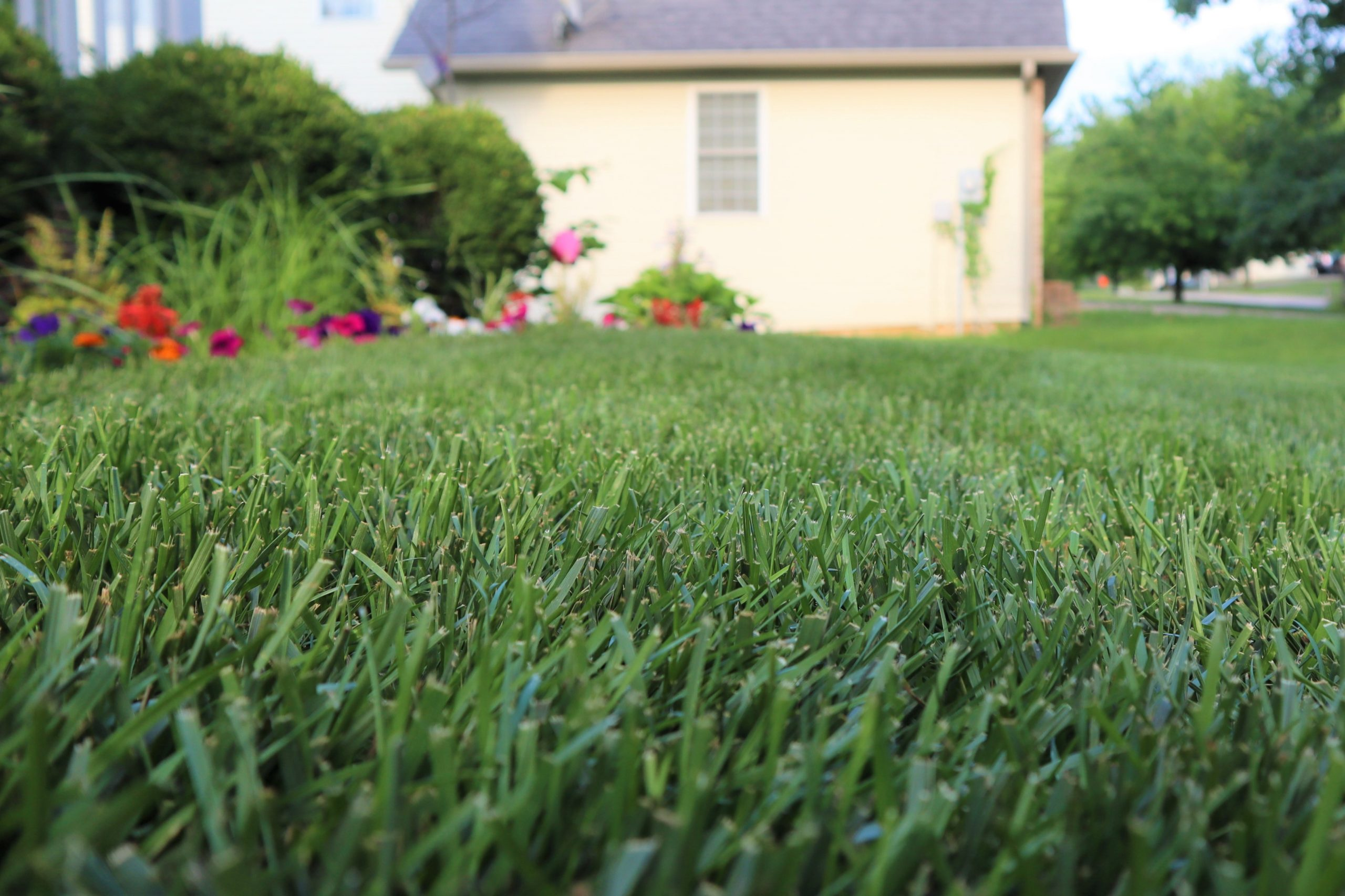 The Benefits of Using Liquid Fertilizer on Your Lawn 4